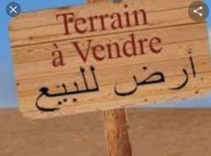 Alger-Immobilier-A-Vendre-terrain-300m²