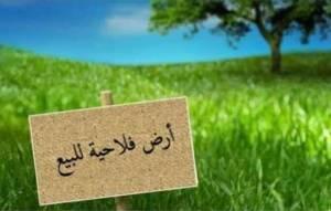 Sidi-bel-abbes-Maison-Jardin-أرض-فلاحية-للبيع-عقد-ملكية-دفتر-عقاري-3-هكتار
